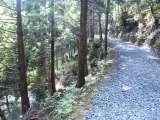 たかのすの森遊歩道